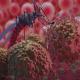 malaria boala transmisa de tantari