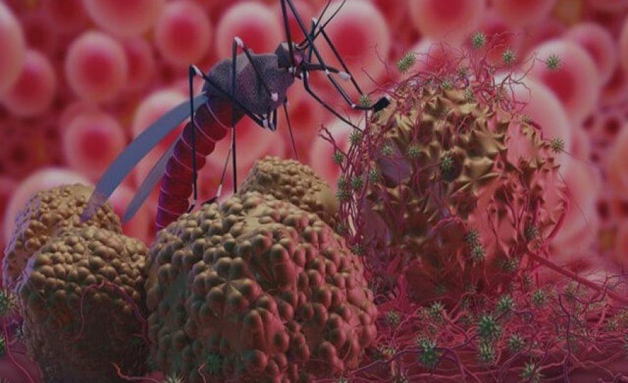 Despre bolile transmise de tantari si cum ne protejam impotriva acestora